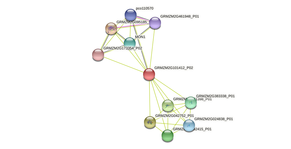 GRMZM2G101412_P02 protein (Zea mays) - STRING interaction network