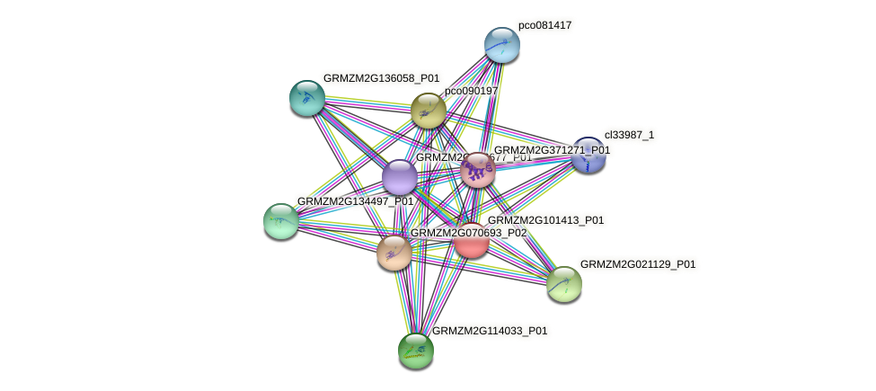 GRMZM2G101413_P01 protein (Zea mays) - STRING interaction network