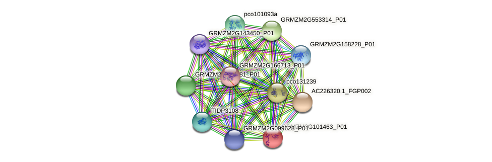 GRMZM2G101463_P01 protein (Zea mays) - STRING interaction network