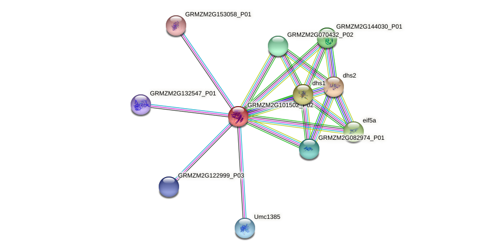 GRMZM2G101502_P02 protein (Zea mays) - STRING interaction network