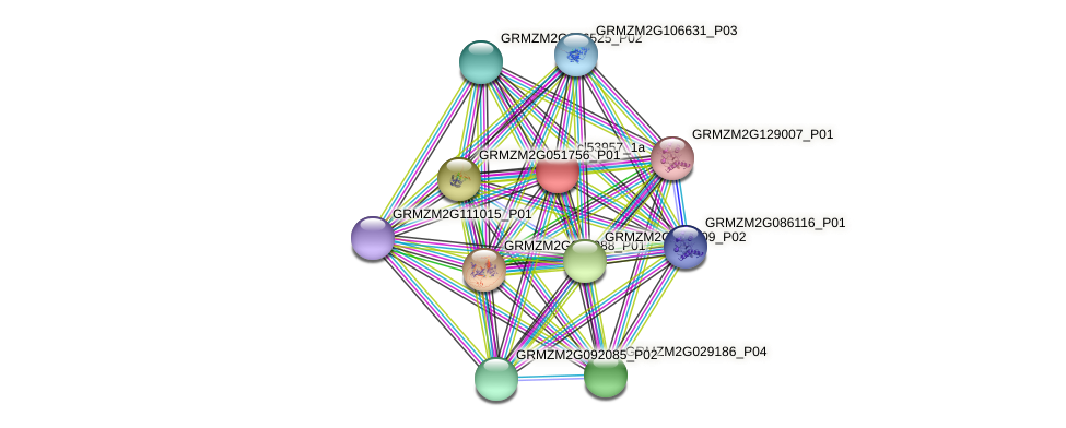 cl53957_1a protein (Zea mays) - STRING interaction network