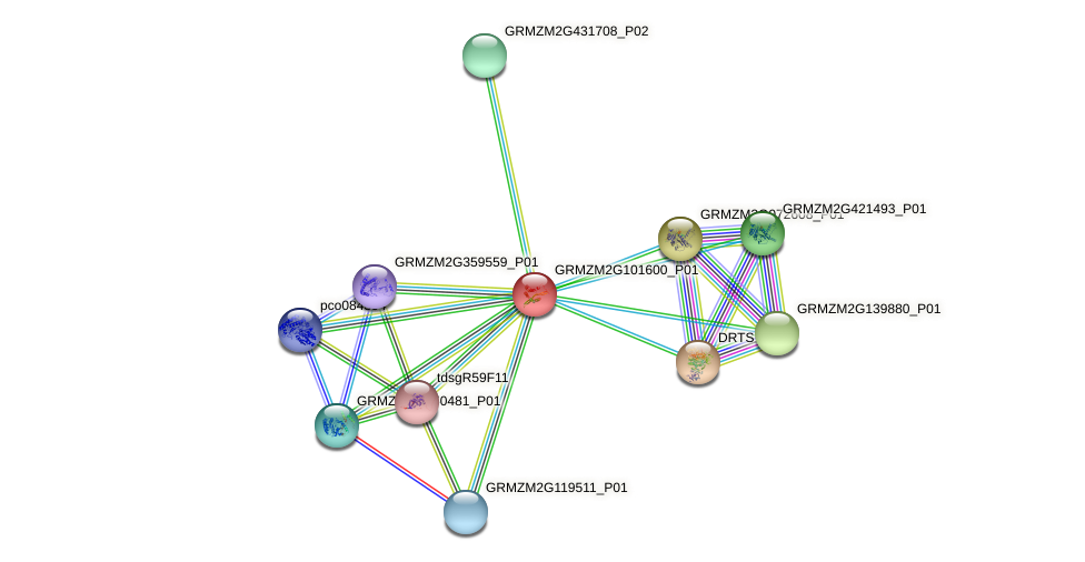 GRMZM2G101600_P01 protein (Zea mays) - STRING interaction network