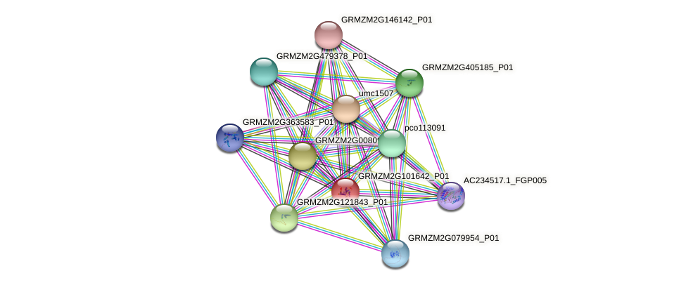 GRMZM2G101642_P01 protein (Zea mays) - STRING interaction network