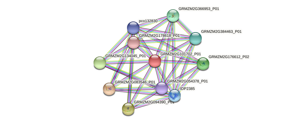 GRMZM2G101702_P01 protein (Zea mays) - STRING interaction network