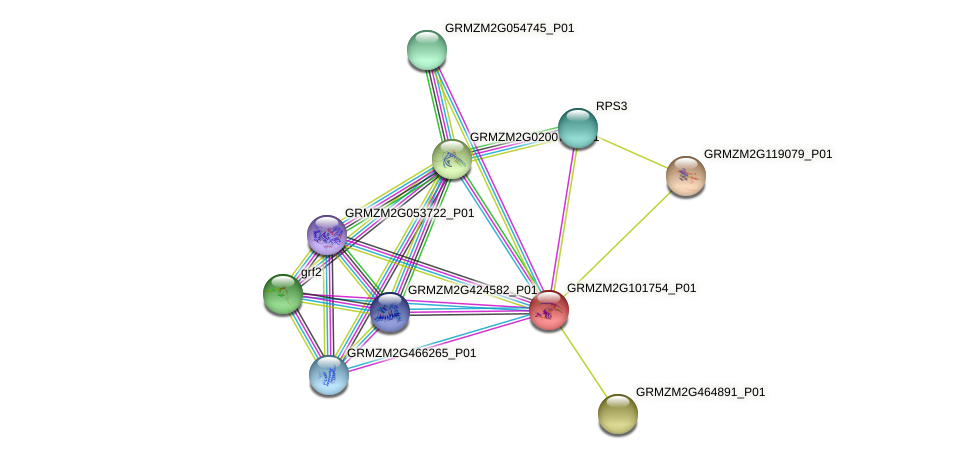 GRMZM2G101754_P01 protein (Zea mays) - STRING interaction network