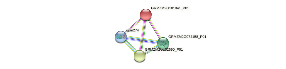 GRMZM2G101841_P01 protein (Zea mays) - STRING interaction network