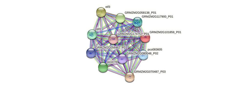GRMZM2G101859_P01 protein (Zea mays) - STRING interaction network