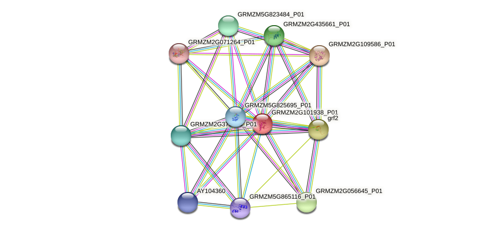 GRMZM2G101938_P01 protein (Zea mays) - STRING interaction network