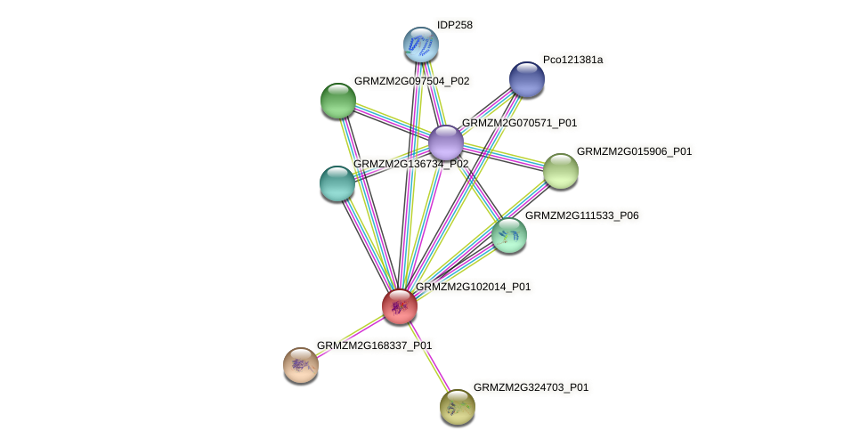 GRMZM2G102014_P01 protein (Zea mays) - STRING interaction network