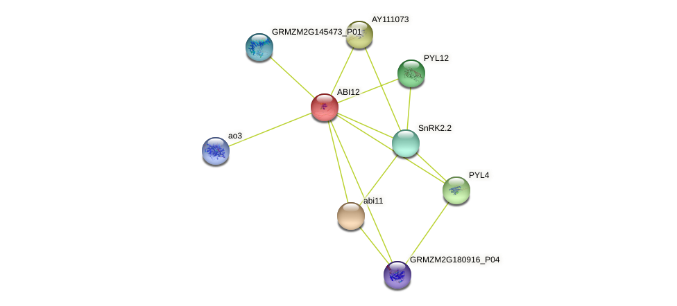 ABI12 protein (Zea mays) - STRING interaction network