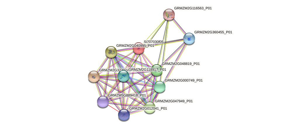 GRMZM2G102069_P01 protein (Zea mays) - STRING interaction network