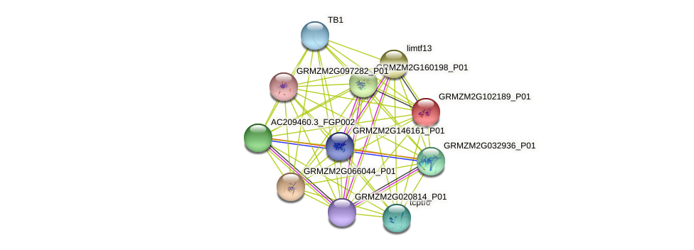 GRMZM2G102189_P01 protein (Zea mays) - STRING interaction network
