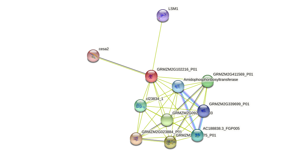 GRMZM2G102216_P01 protein (Zea mays) - STRING interaction network