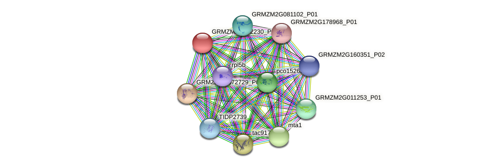 GRMZM2G102230_P01 protein (Zea mays) - STRING interaction network