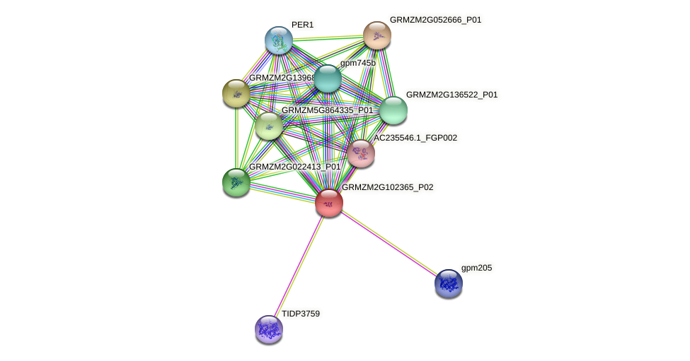 GRMZM2G102365_P02 protein (Zea mays) - STRING interaction network