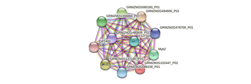 GRMZM2G102447_P02 protein (Zea mays) - STRING interaction network