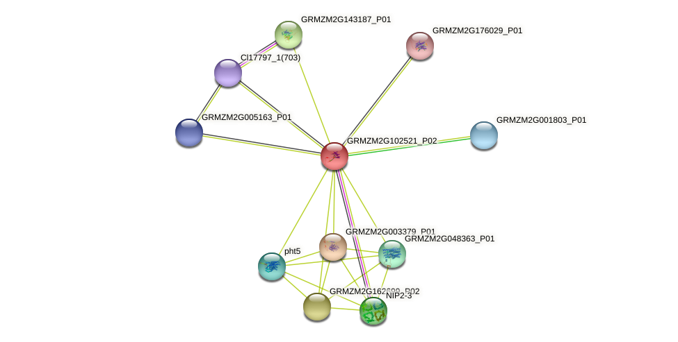 GRMZM2G102521_P02 protein (Zea mays) - STRING interaction network