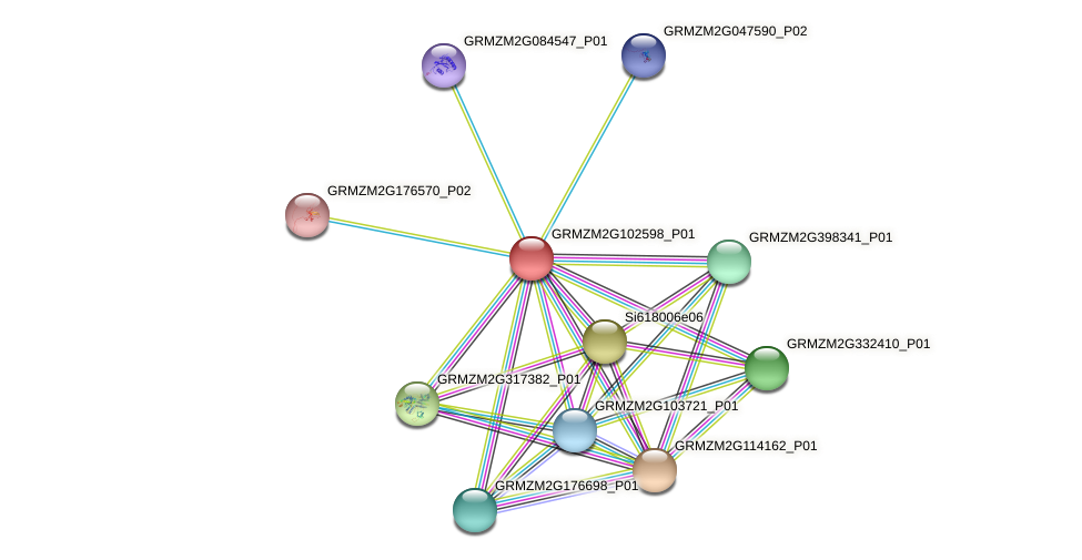 GRMZM2G102598_P01 protein (Zea mays) - STRING interaction network