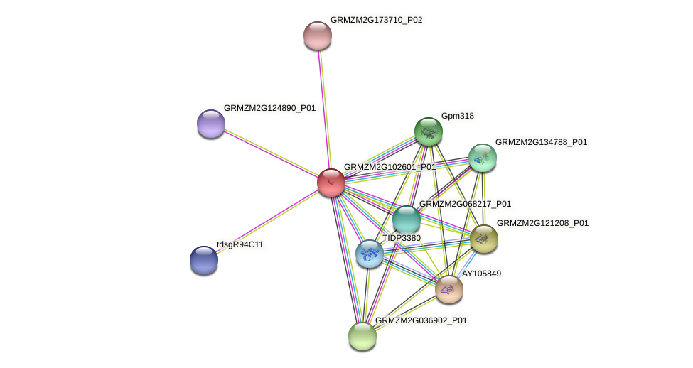 Zm.56092 protein (Zea mays) - STRING interaction network