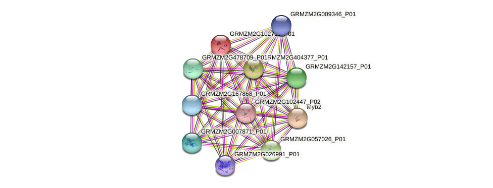GRMZM2G102711_P01 protein (Zea mays) - STRING interaction network
