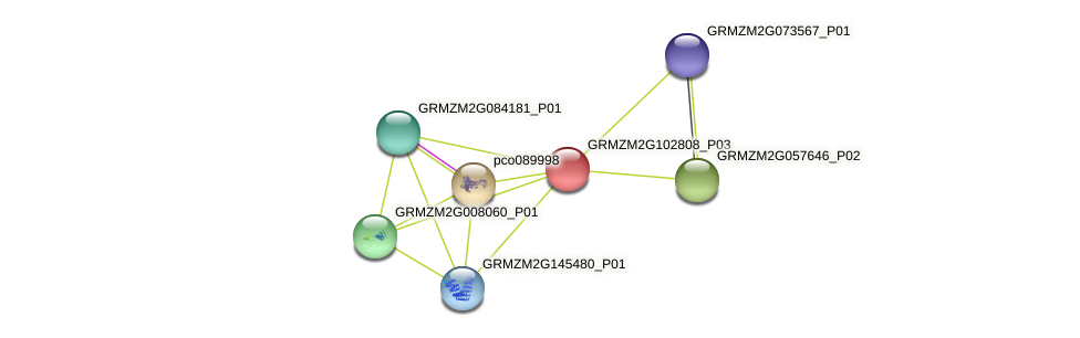 GRMZM2G102808_P03 protein (Zea mays) - STRING interaction network