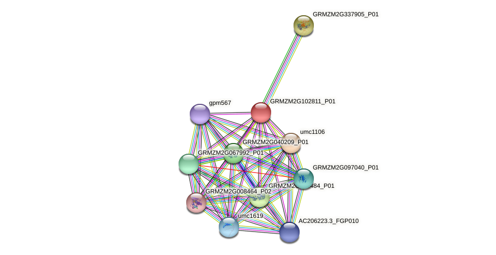 GRMZM2G102811_P01 protein (Zea mays) - STRING interaction network