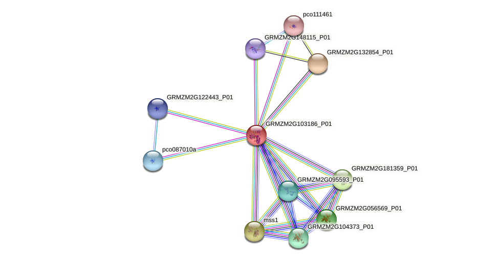 GRMZM2G103186_P01 protein (Zea mays) - STRING interaction network