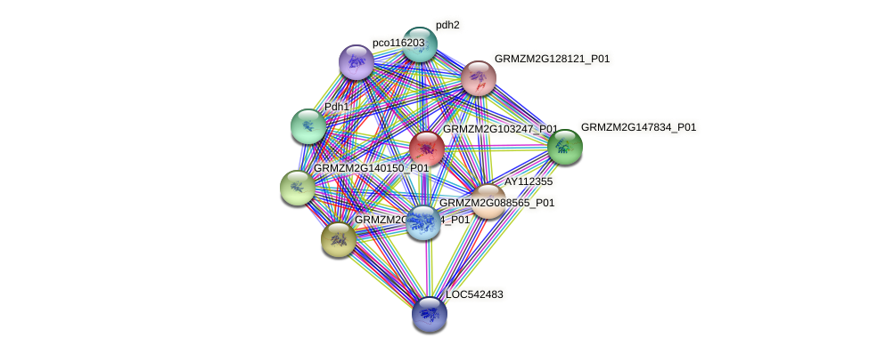 GRMZM2G103247_P01 protein (Zea mays) - STRING interaction network