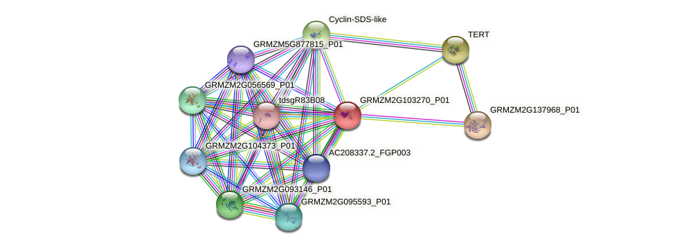 GRMZM2G103270_P01 protein (Zea mays) - STRING interaction network