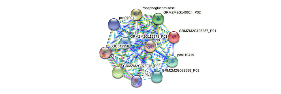 GRMZM2G103287_P01 protein (Zea mays) - STRING interaction network