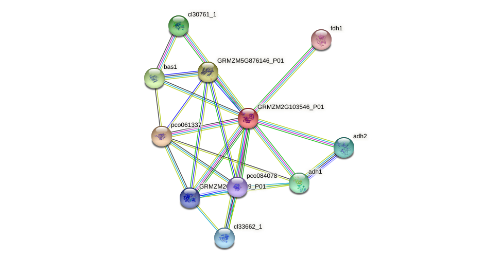 Zm.16547 protein (Zea mays) - STRING interaction network