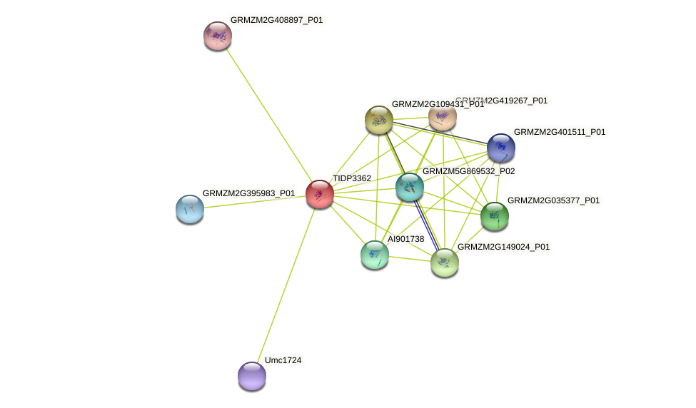 pglcat6 protein (Zea mays) - STRING interaction network