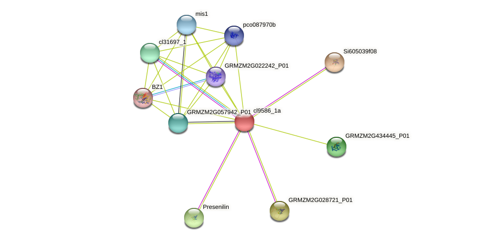 cl9586_1a protein (Zea mays) - STRING interaction network