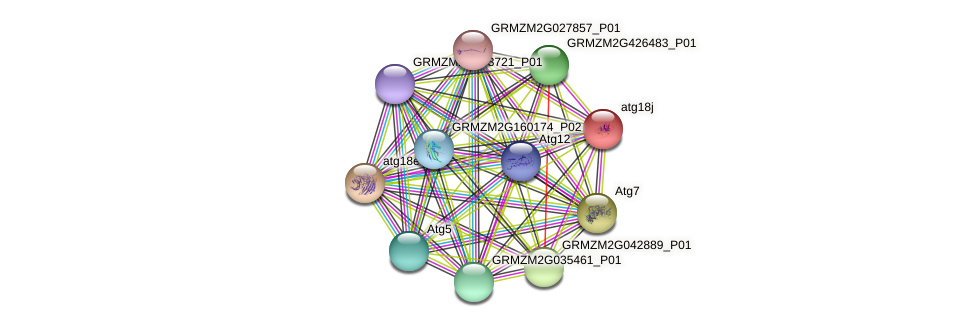 GRMZM2G103793_P01 protein (Zea mays) - STRING interaction network