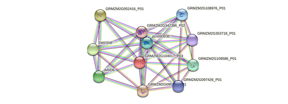 GRMZM2G104017_P02 protein (Zea mays) - STRING interaction network