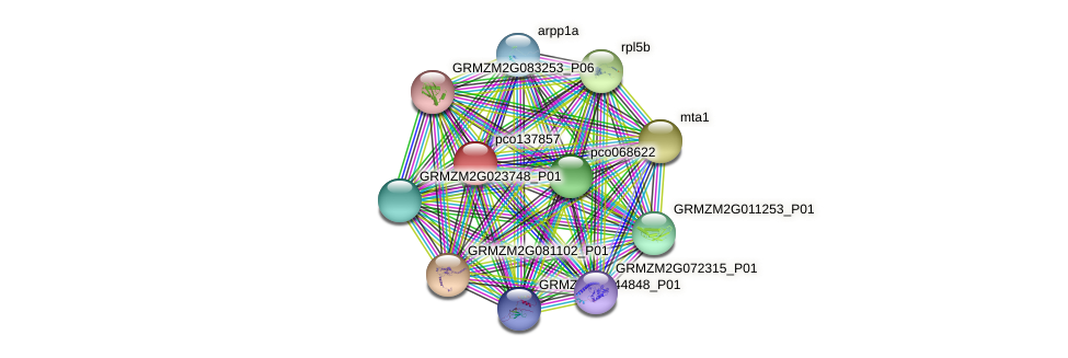 pco137857 protein (Zea mays) - STRING interaction network