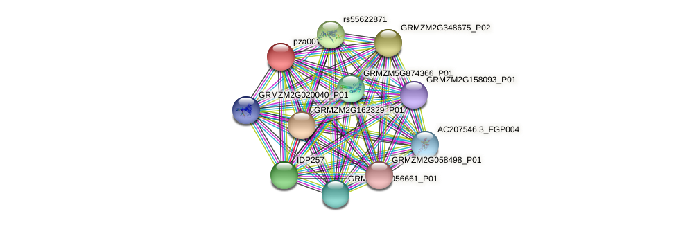 pza00132 protein (Zea mays) - STRING interaction network