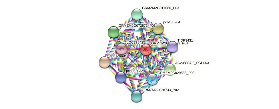 GRMZM2G104373_P01 protein (Zea mays) - STRING interaction network