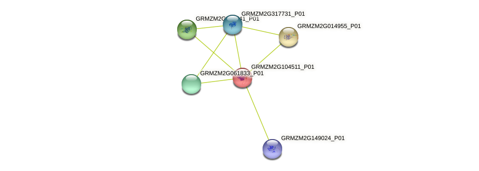 GRMZM2G104511_P01 protein (Zea mays) - STRING interaction network