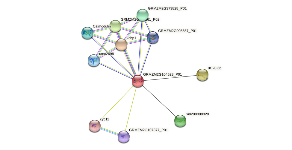 GRMZM2G104523_P01 protein (Zea mays) - STRING interaction network