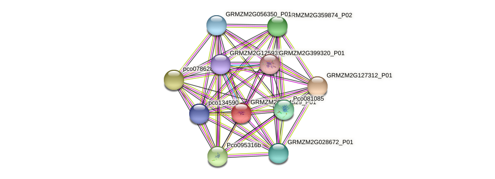 GRMZM2G104529_P01 protein (Zea mays) - STRING interaction network