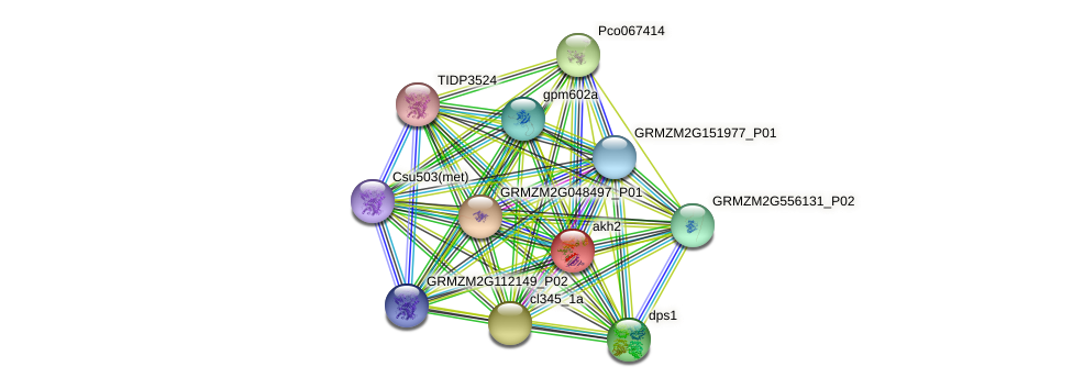 AKHSDH2 protein (Zea mays) - STRING interaction network