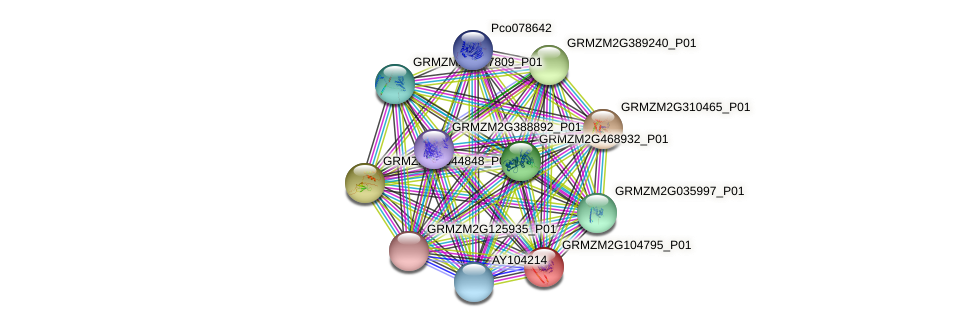 GRMZM2G104795_P01 protein (Zea mays) - STRING interaction network