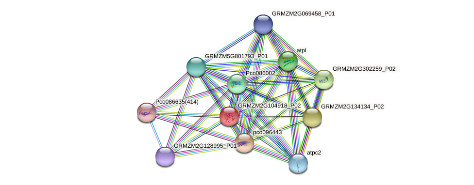 GRMZM2G104918_P01 protein (Zea mays) - STRING interaction network