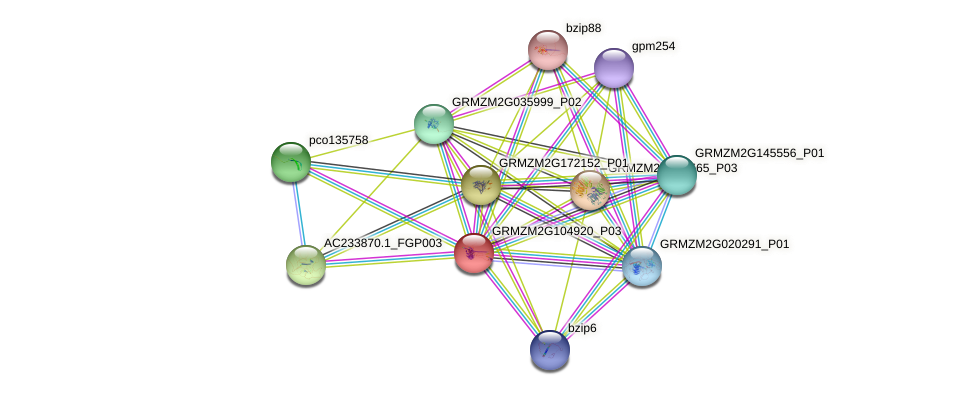 GRMZM2G104920_P03 protein (Zea mays) - STRING interaction network