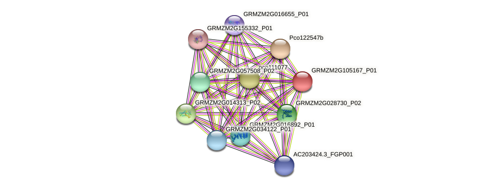 GRMZM2G105167_P01 protein (Zea mays) - STRING interaction network