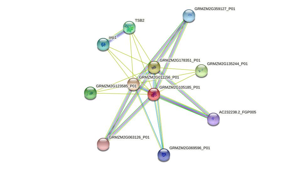 GRMZM2G105185_P01 protein (Zea mays) - STRING interaction network