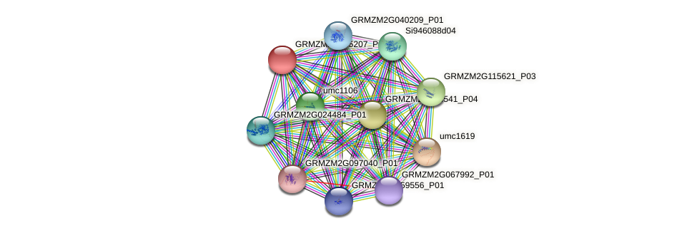 GRMZM2G105207_P02 protein (Zea mays) - STRING interaction network