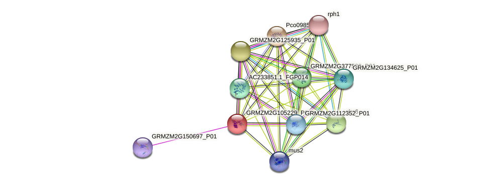 GRMZM2G105229_P02 protein (Zea mays) - STRING interaction network