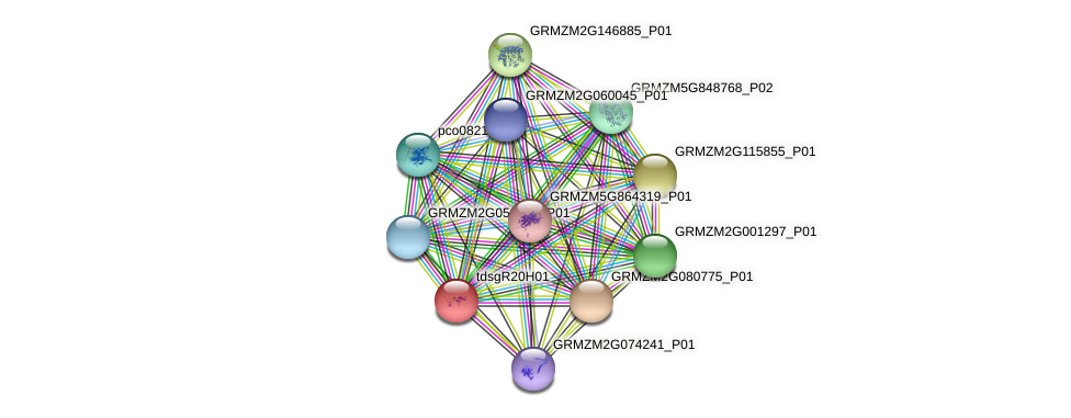 GRMZM2G105245_P01 protein (Zea mays) - STRING interaction network